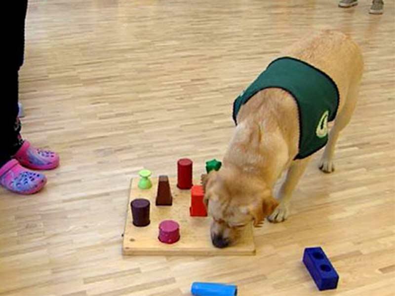 Sprechen lernen mit Therapiehunden